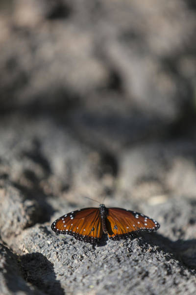 Photograph - Butterfly At Rest 2 by Scott Campbell