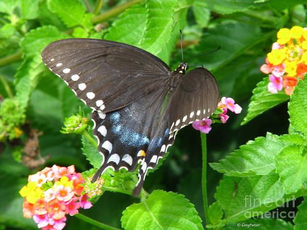 Patzer Photograph - Butterfly Ballot by Greg Patzer