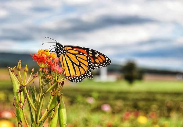 Photograph - Butterfly Beauty by Kathy McCabe