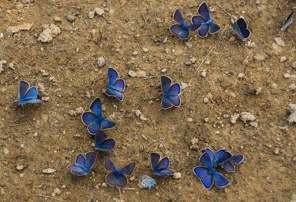Strange Land Wall Art - Photograph - The Butterfly Convention by Georgia Mizuleva