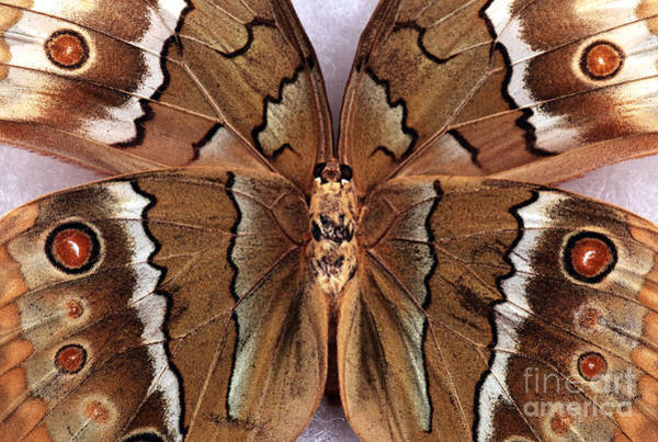 Photograph - Butterfly Design by John Rizzuto