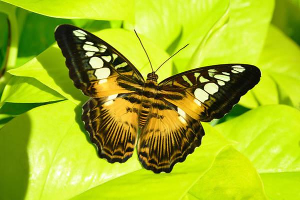 Photograph - Butterfly by Dragan Kudjerski
