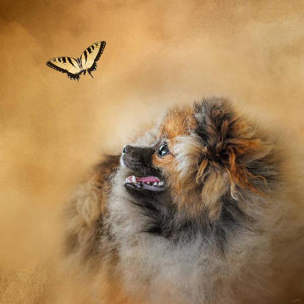 Photograph - Butterfly Dreams - Pomeranian by Jai Johnson
