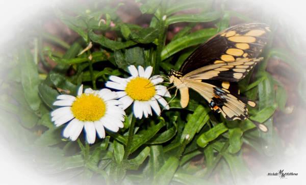 Wall Art - Photograph - Butterfly Drums by Mechala Matthews