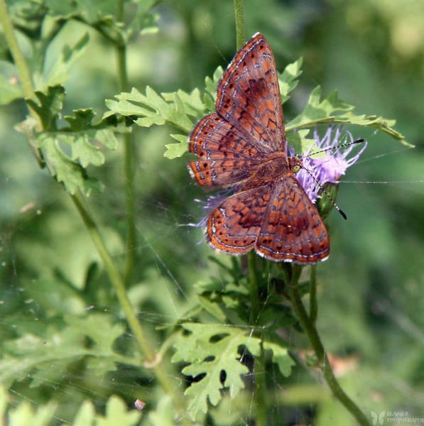 Photograph - Butterfly by Elaine Malott