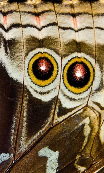 Photograph - Butterfly Eyes by Jennifer Kano