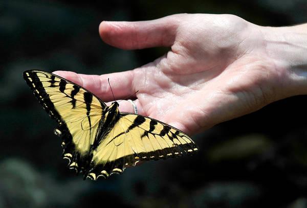 Photograph - Butterfly Friend by Lara Ellis