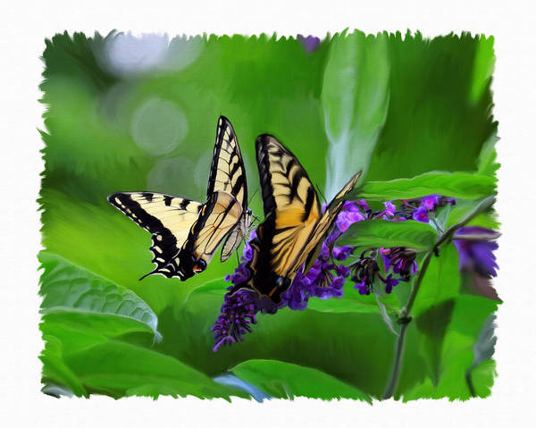 Wall Art - Photograph - Butterfly Friends by Dave Sandt