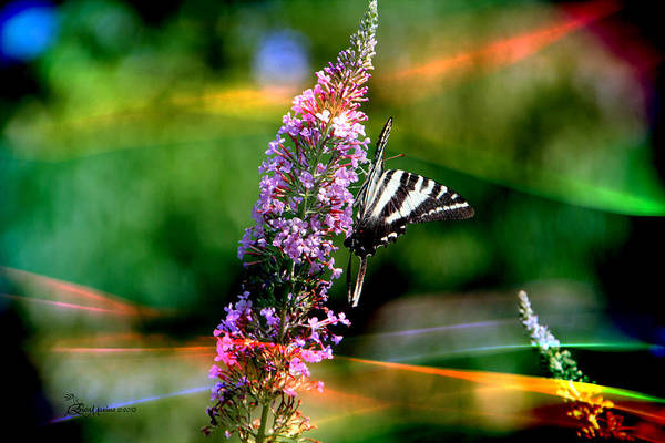 Photograph - Butterfly Fun-featured In Visions Of The Night  - Wildlife And Nature Photography Groups by Ericamaxine Price