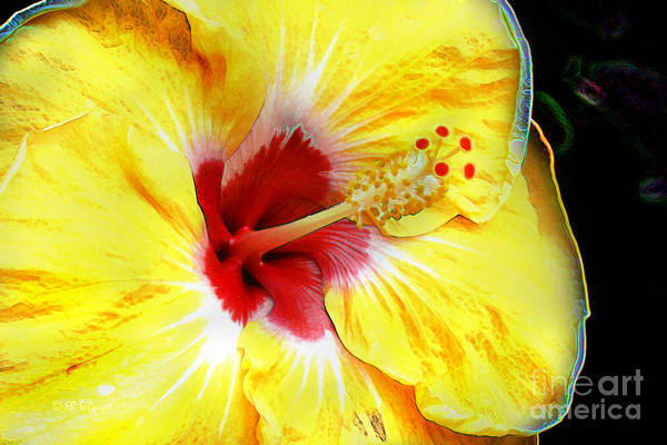 Digital Art - Butterfly Garden 07 - Hibiscus by E B Schmidt