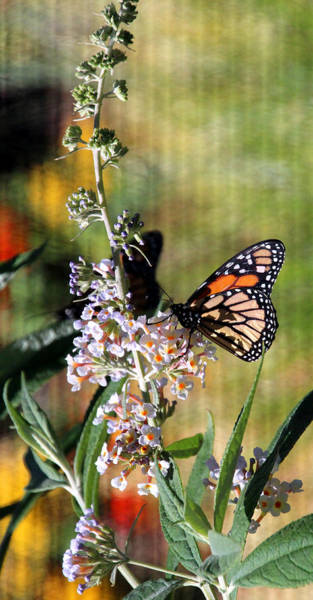 Honor Heights Park Photograph - Butterfly Garden Scene by Carolyn Fletcher