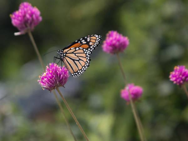 Wall Art - Photograph - Butterfly Gardens by Robert Torkomian