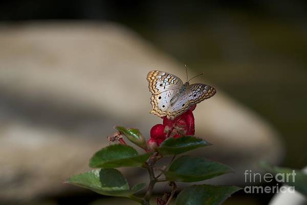Photograph - Butterfly House by Joseph Yarbrough