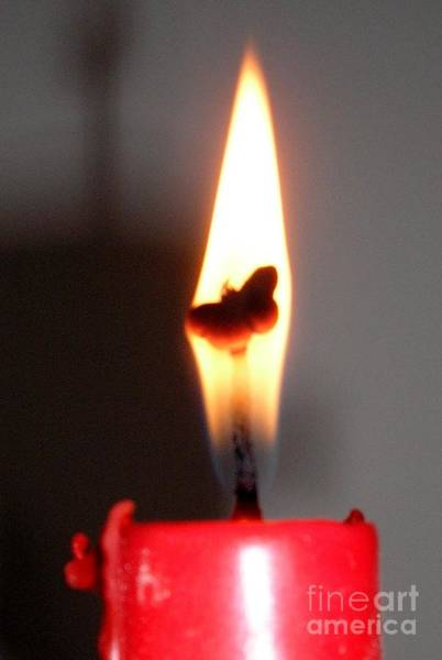 Photograph - Butterfly Flame by Karen Jane Jones