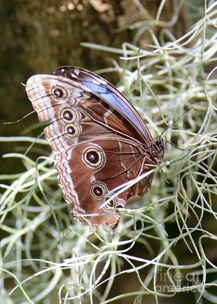 Photograph - Butterfly In Moss by Carol Groenen