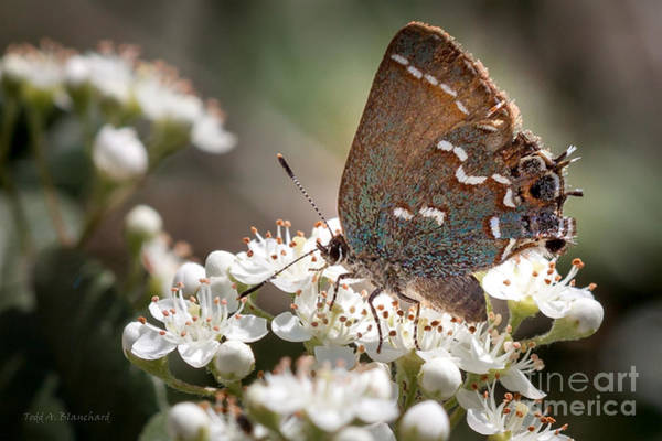 Photograph - Butterfly In The Garden by Todd Blanchard