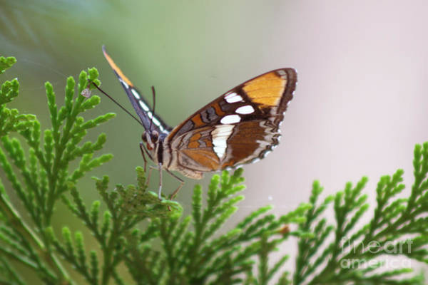 Photograph - Butterfly by M Valeriano