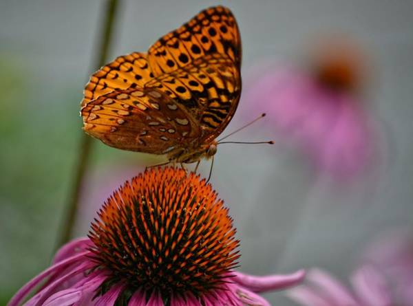 Photograph - Butterfly by Kathy McCabe