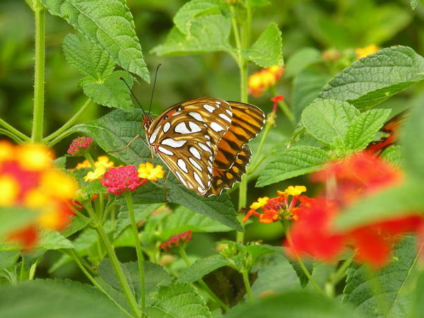 Photograph - Butterfly 2 by Lisa Wooten