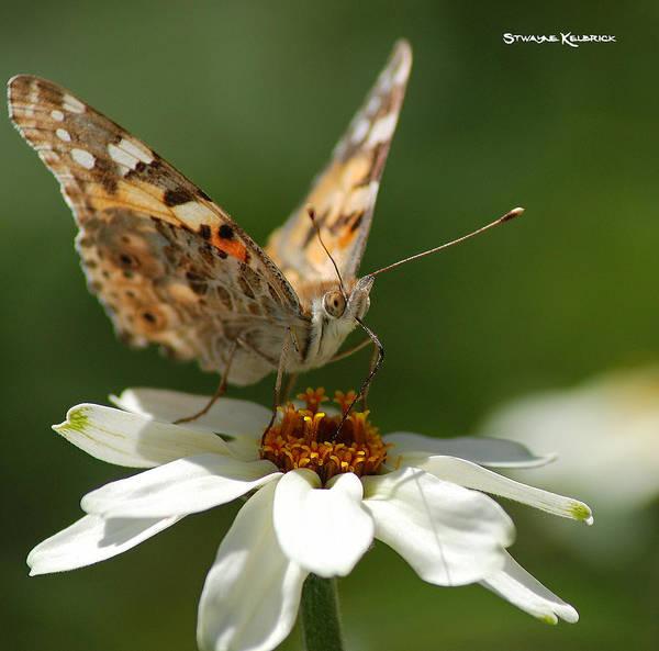Photograph - Butterfly Macro Photography by Stwayne Keubrick