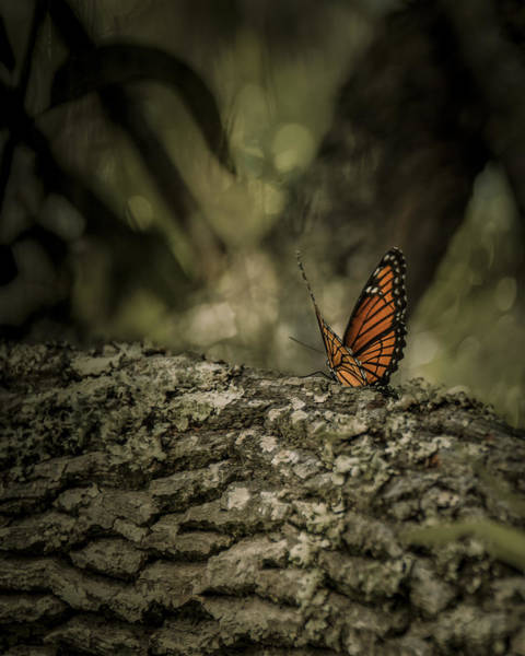 Photograph - Butterfly by Mario Celzner