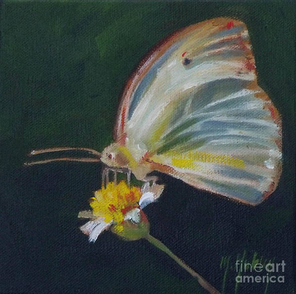 Cabbage White Painting - Butterfly by Mary Hubley
