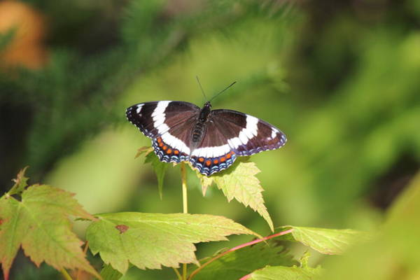 Wall Art - Photograph - Butterfly by Nathan Kelly
