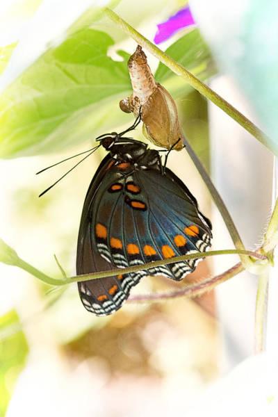 Larva Wall Art - Photograph - Butterfly Nursery by Jon Woodhams