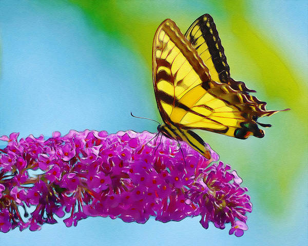 Wall Art - Photograph - Butterfly On A Flower by Dave Sandt