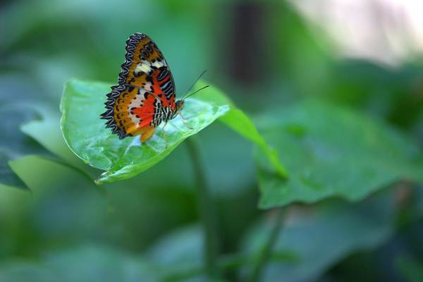 Photograph - Butterfly On A Leaf by Gordon Elwell