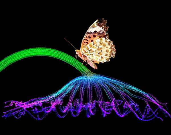 Wall Art - Photograph - Butterfly On Lotus Leaf by K H Fung/science Photo Library