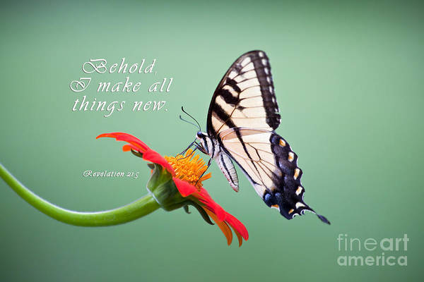 Photograph - Butterfly On Sunflower With Scripture by Jill Lang