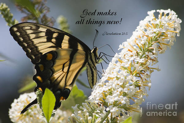 Photograph - Butterfly On White Bush With Scripture by Jill Lang