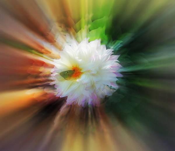 Butterfly On Flower Digital Art - Butterfly On White Flower by Lilia D