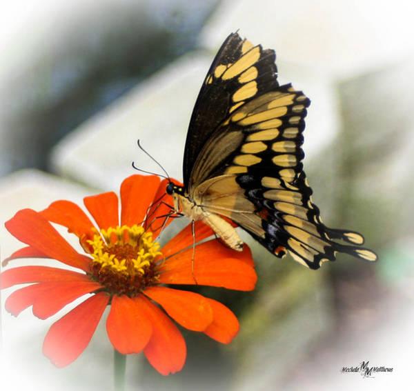 Wall Art - Photograph - Butterfly Orange Juice by Mechala Matthews