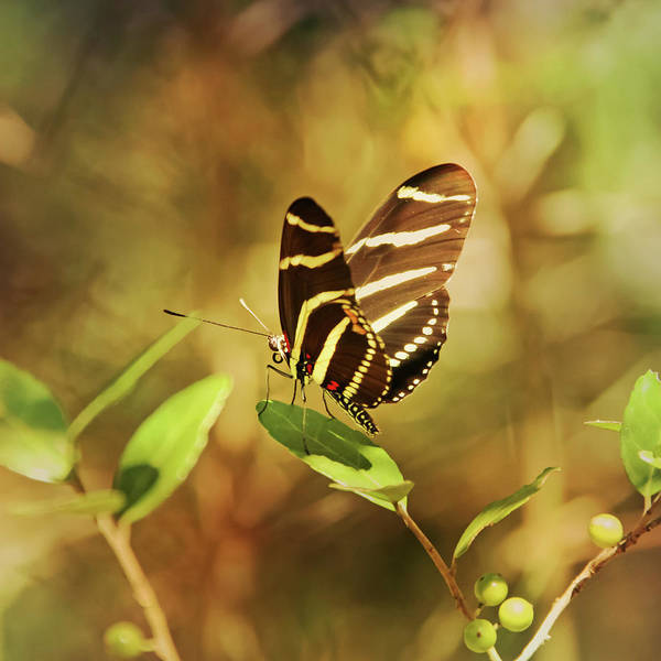 South Carolina Photograph - Butterfly Pausing On Leaf by Daniela Duncan
