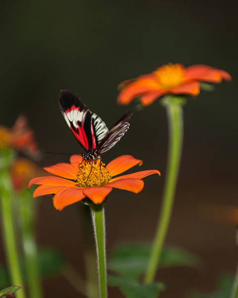 Photograph - Butterfly Perch by Paul Johnson