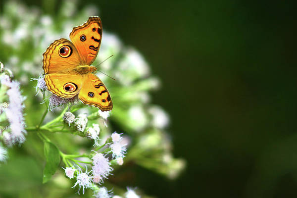 Insect Photograph - Butterfly Perching On A Wild Plant by Visage