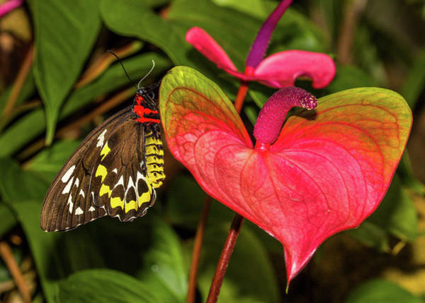 Gainesville Photograph - Butterfly Perching On Leaf In A Garden by Animal Images