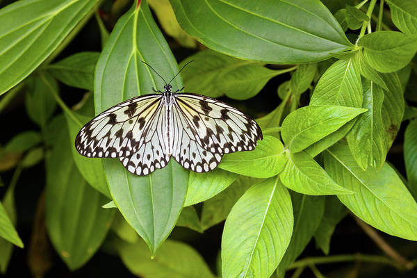 Gainesville Photograph - Butterfly Perching On Leaf In A Garden by Panoramic Images
