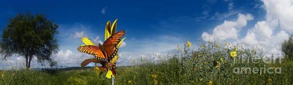 Photograph - Butterfly Picnic by John  Kolenberg
