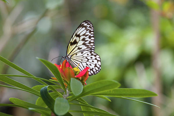 Gainesville Photograph - Butterfly Pollinating Flower by Animal Images