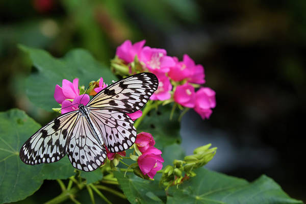 Gainesville Photograph - Butterfly Pollinating Flower by Panoramic Images