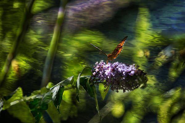 Photograph - Butterfly Ripple by Belinda Greb
