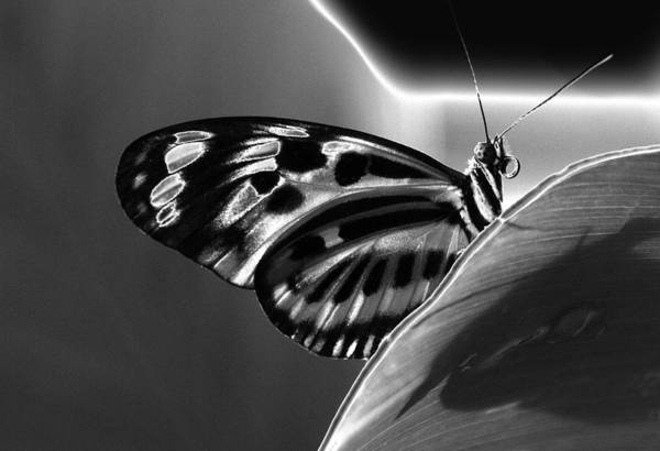 Butterfly Solarized Art Print