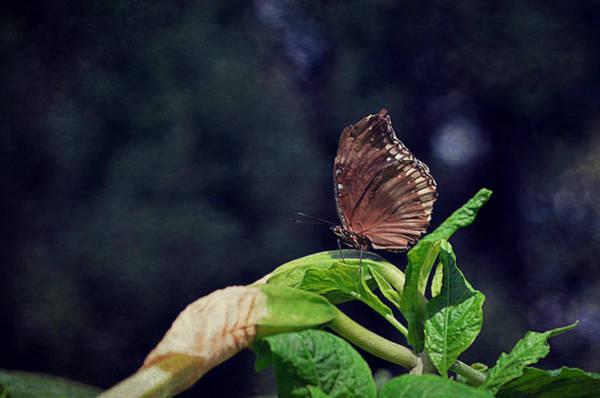 Butterfly On Flower Digital Art - Butterfly Sunbathing by Maria Angelica Maira