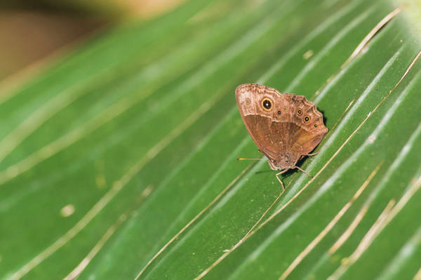 Insect Photograph - Butterfly Sunning On Large Leaf, Vernon by Peter Chadwick