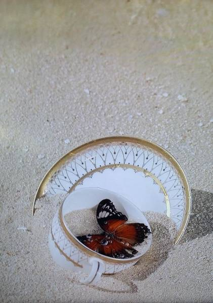 Portriat Photograph - Butterfly Teacups On The Beach by Rob Hans