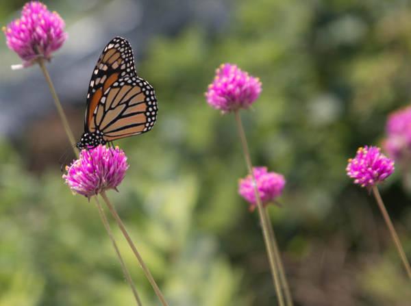 Wall Art - Photograph - Butterfly by Robert Torkomian