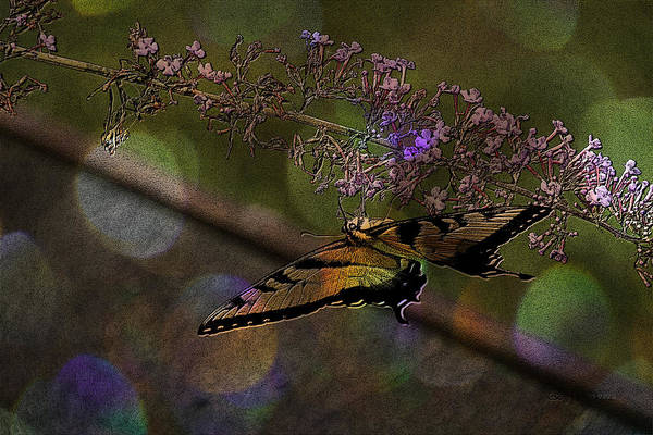 Photograph - Butterfly Upside Down by Ericamaxine Price